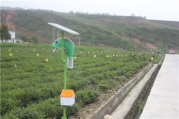 房县茶园装上太阳能多功能扇吸式捕虫器