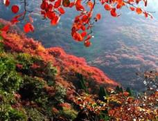 湖北22条乡村游线路美得惊动国家 十堰这五个景点在列