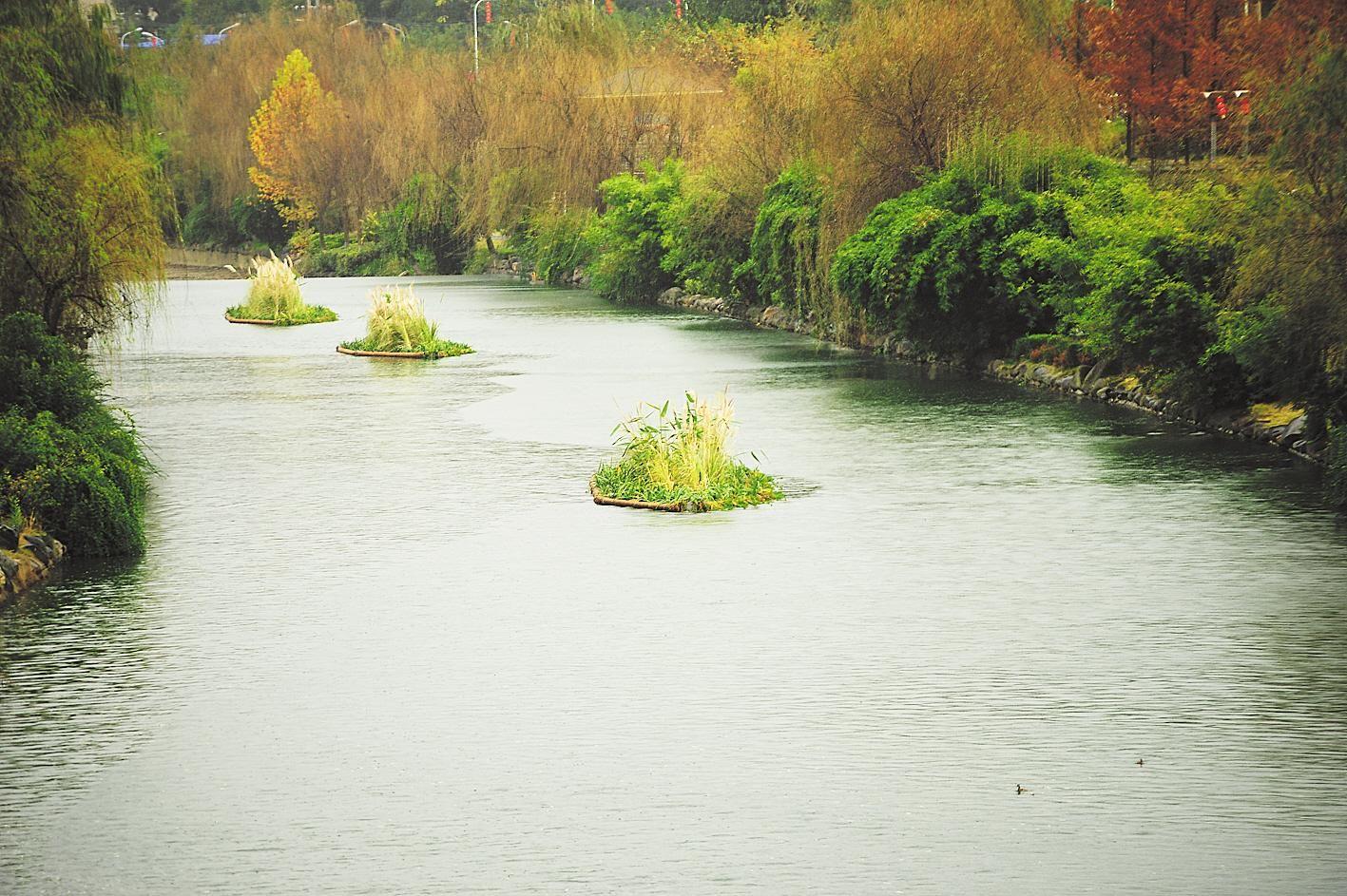 """十堰市马家河:人工漂浮湿地为鸟儿提供水上""""别墅"""""""