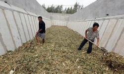 """综合利用率达98%!房县农作物秸秆从无处安放变""""香饽饽"""""""