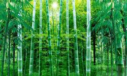 农发行竹山支行放贷2亿元 支持建设8万亩竹林示范基地